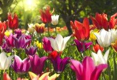 es-gruent-und-blueht-fruehlingsblumen-fuer-den-garten.jpg